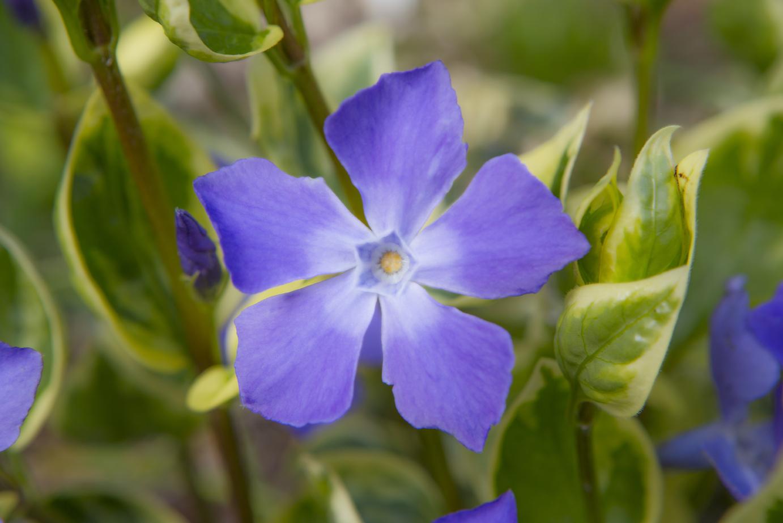 Flowers Hythe Apr 19-2