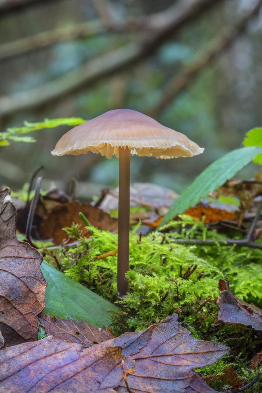 Mushroom 2018-2a