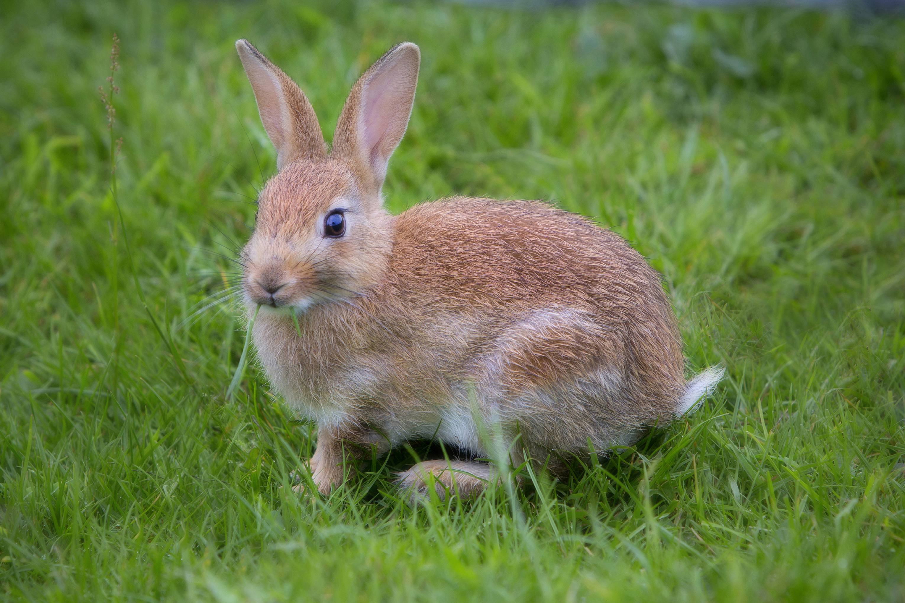 Rabbit June 2014-1a