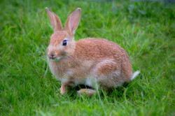 Rabbit June 2014-1a