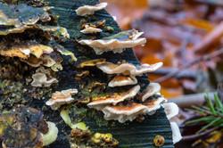 Mushroom 2018-12