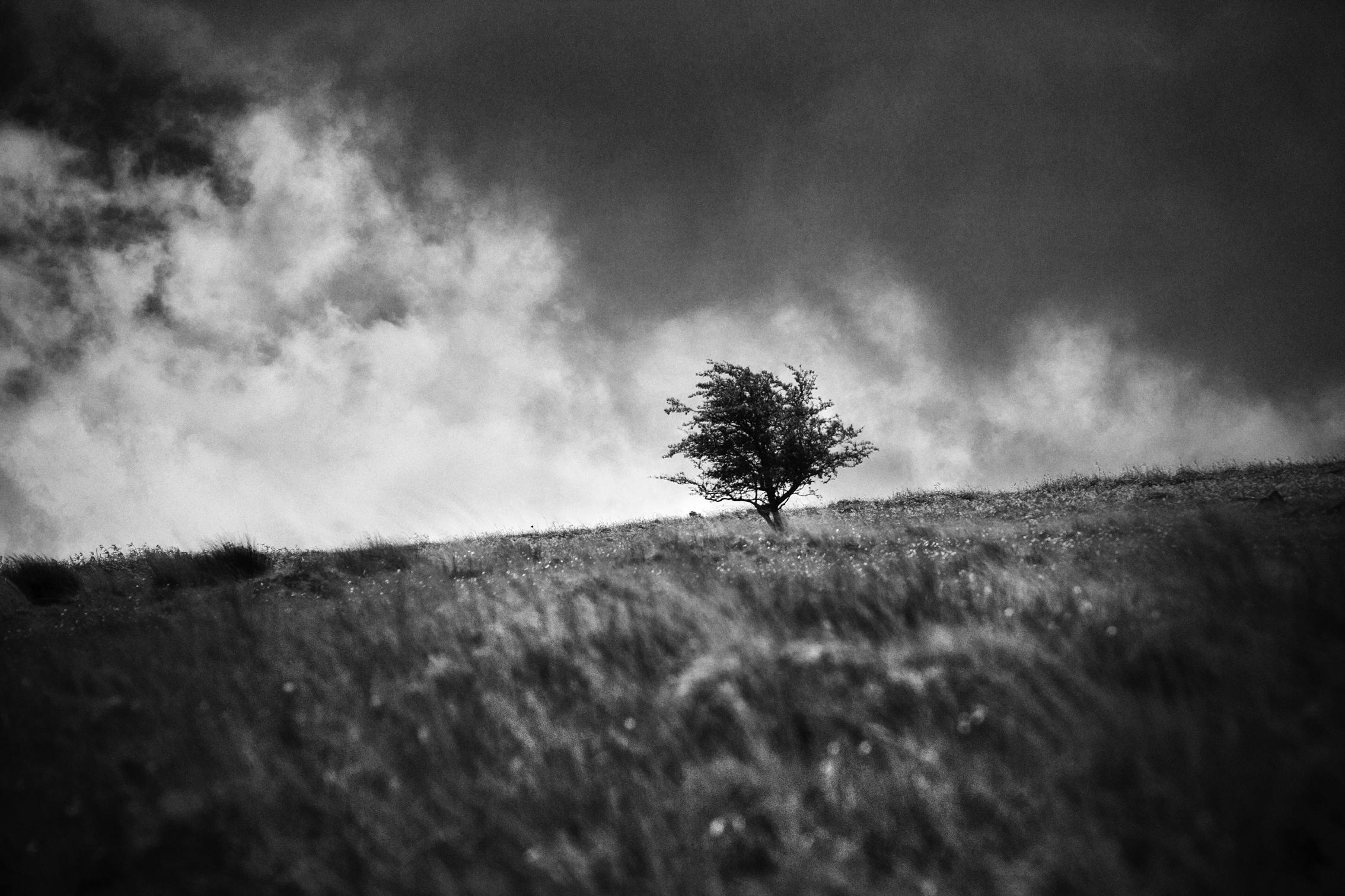 Single tree 2017-1b