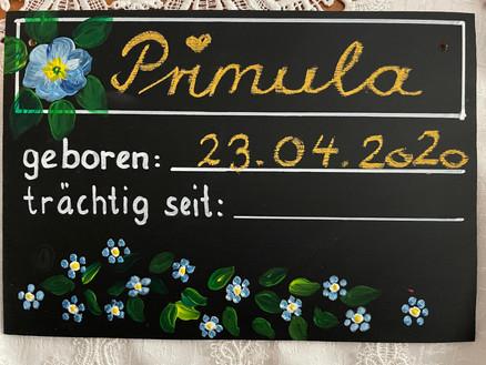 Stalltafel Primula