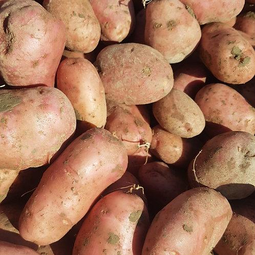 Kartoffel Désirée
