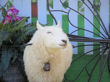 mystery the sheep.JPG