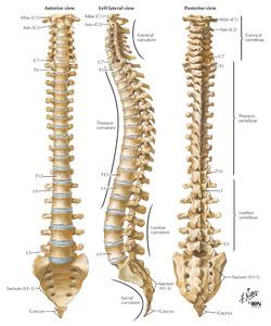 spine1.jpg