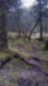 Moss ground cover around Mendenhall Glacier
