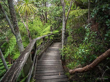 Trail at Tiritiri Matangi Island By GarSham (Flickr).jpg
