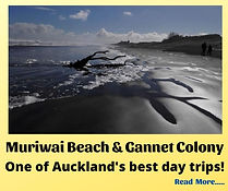 Muriwai Beach (Home Page).jpg