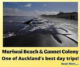 Muriwai Beach (Home Page).jpg