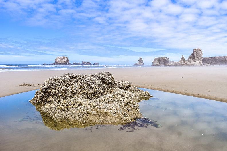 Bandon Tide Pool Oregon Coast