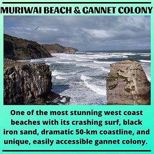 POSTER- MURIWAI BEACH.jpg