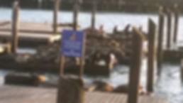 Sea Lions at Fisherman's Wharf San Francisco.