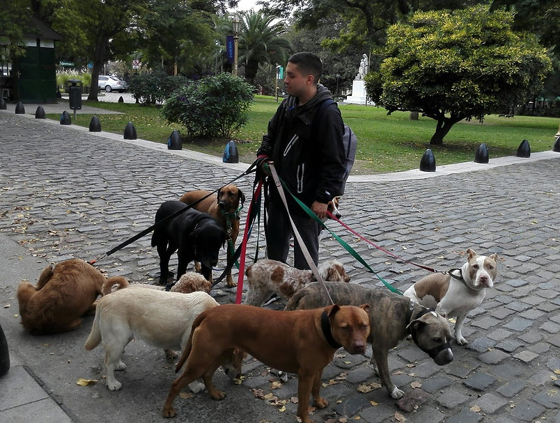 Dog walkers, Buenos Aires.jpg