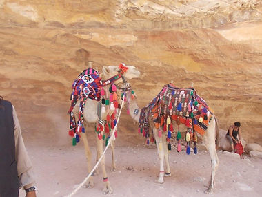 The colorful camels at Petra, Jordan