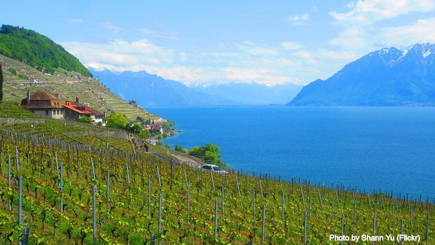 Lavaux Vineyards by Shann Yu