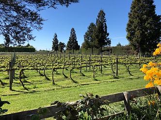 Tasman in the Vineyards 2