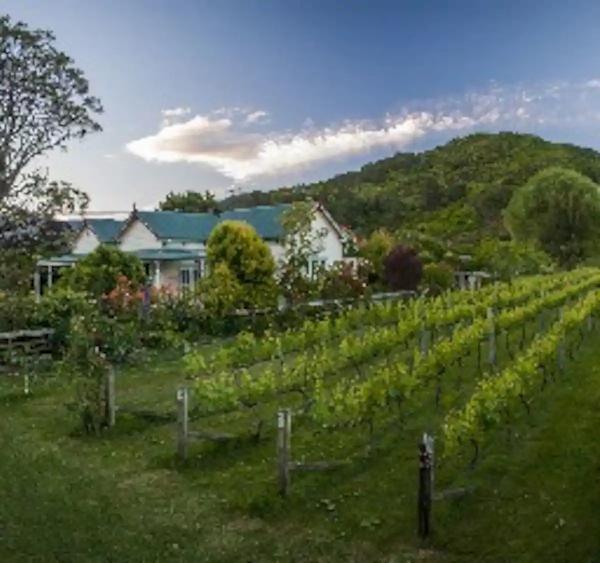 Tasman in the Vineyards.