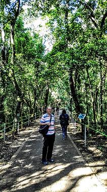 Easy walking track in Iguazu Falls Natio