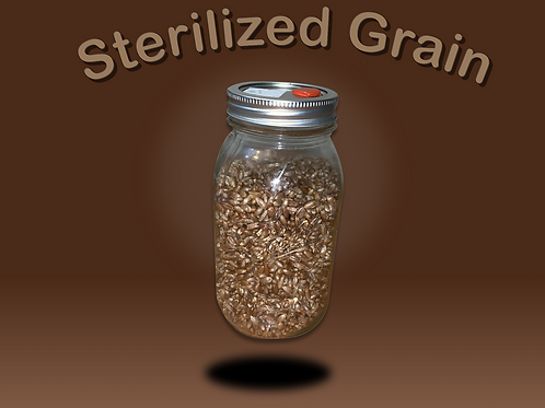 Sterilized Rye Grain