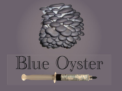 Blue Oyster Mushroom Liquid Culture