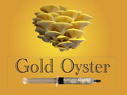 Gold Oyster Mushroom Liquid Culture