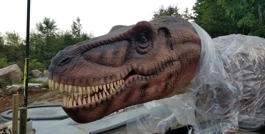 T-Rex up close.