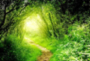 Light_at_the_end-of-the-_tunnel.jpg Lookng down a green track enclosed by trees and seeing sunshine at the end.