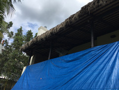 Palm Thatch Removal