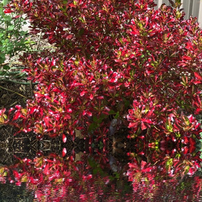The Burning Bush: He Who Meets My Need