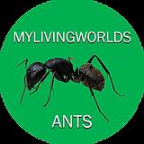 Mylivingworlds ants LOGO.png