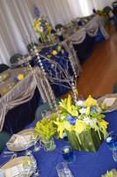 Blue & Yellow Color Scheme