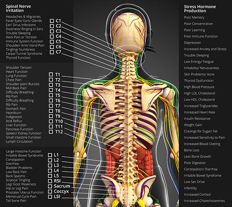 phoenix medical_spinal_chart.jpg
