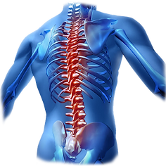 Sport and Spinal Care Therapy.png