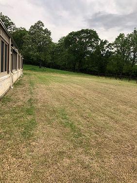 Lawn needing service.jpg