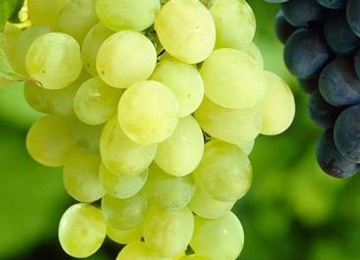 Grapes, White, Bunch