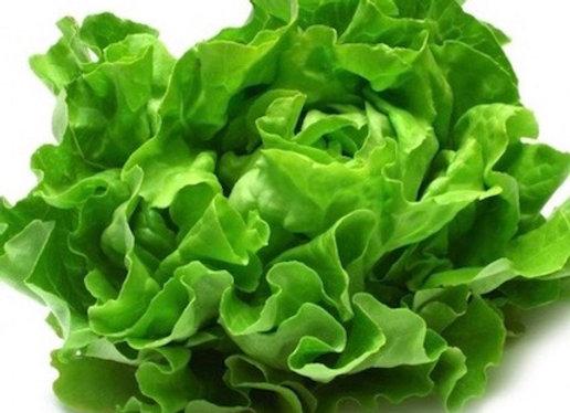 Flat English Lettuce