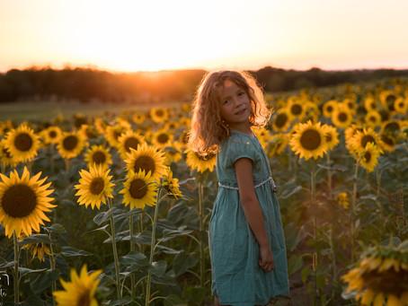 Séance photo dans un champ de tournesol au coucher du soleil dans l'Ain !...