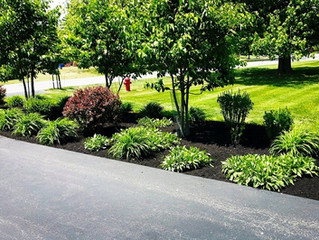 Design tips: How to get the untamed, naturalistic garden