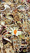 crabs-citysquare-shopping-center.jpg