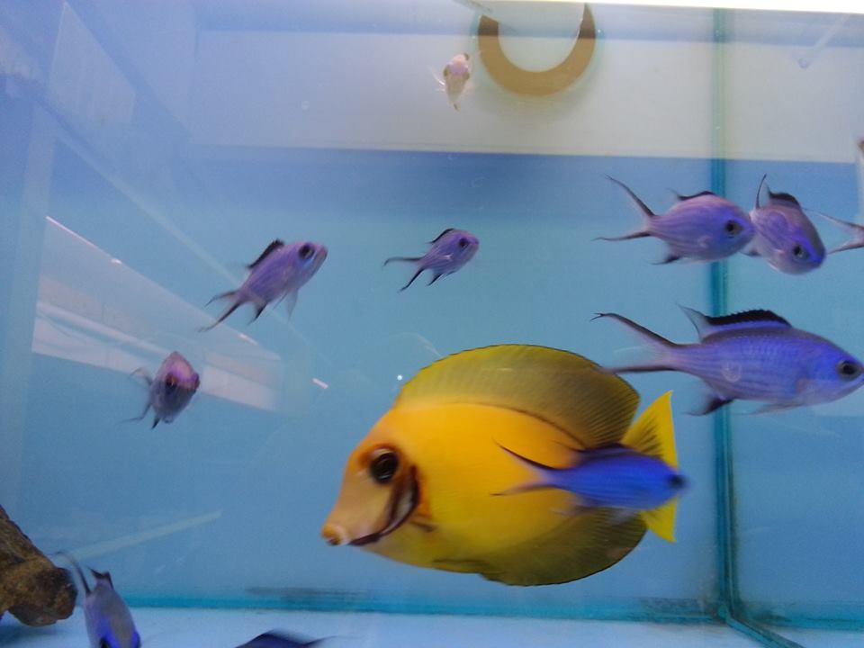 wavertree nook aquarium centre