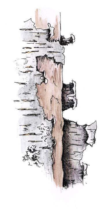 WEB-Birch-Bark