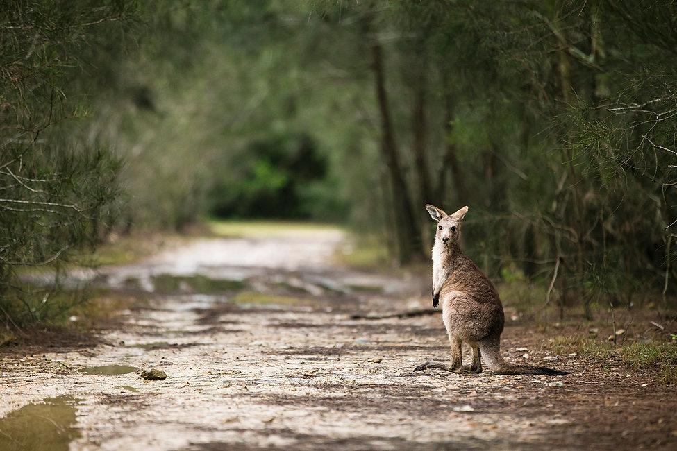 Kangaroo Way