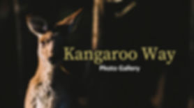 Kangaroo Way Photo Gallery