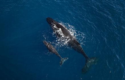 JPEG Baleines.jpg