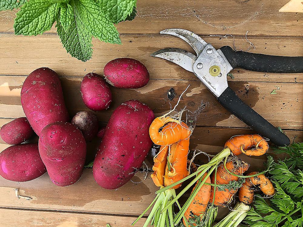 Farm Stay in Paso Robles California with Organic Garden