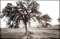 An Ancient Oak Tree on the Farm