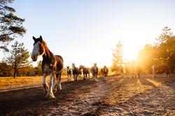 Vineyard Horse Tours