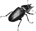 beetle 2 grainy.png