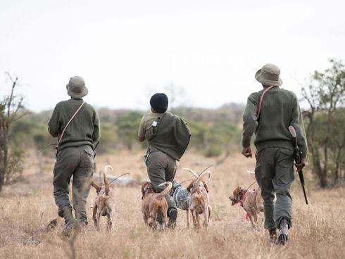 kruger ranger dogs.jpg